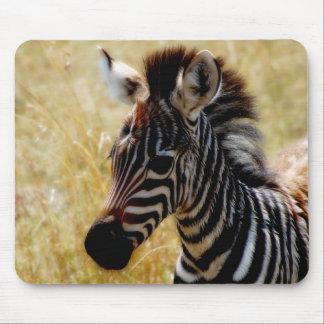 Zebra Foal wildlife mousepads