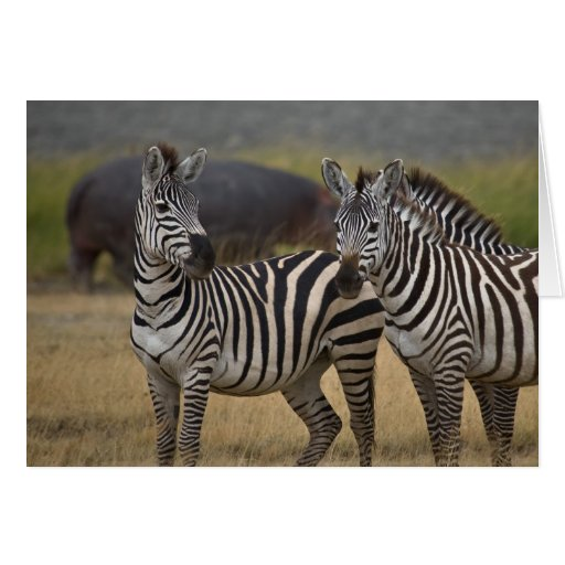 Zebra friendship card
