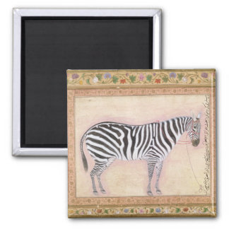 Zebra, from the 'Minto Album', 1621 (gouache on pa Magnet