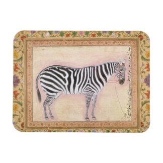 Zebra, from the 'Minto Album', 1621 (gouache on pa Vinyl Magnets