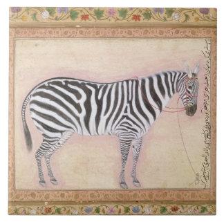 Zebra from the Minto Album 1621 gouache on pa Ceramic Tiles