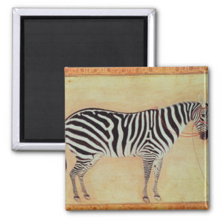 """Zebra, from the """"Minto Album"""", Mughal, 1621, Magnets"""
