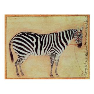 "Zebra, from the ""Minto Album"", Mughal, 1621, Postcard"