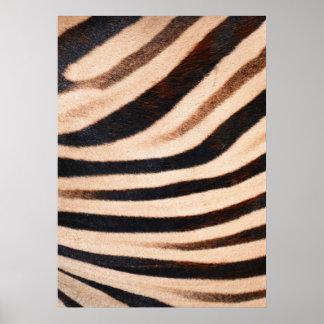 Zebra Fur Poster