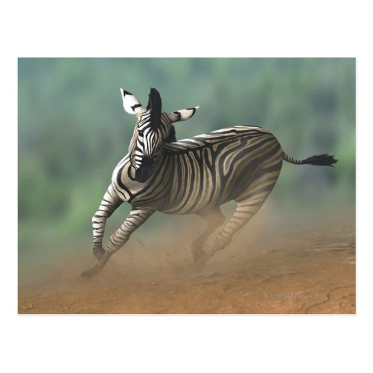 Zebra galloping over the desert landscape. postcard