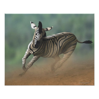 Zebra galloping over the desert landscape. poster