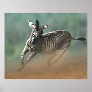 Zebra galloping over the desert landscape. poster