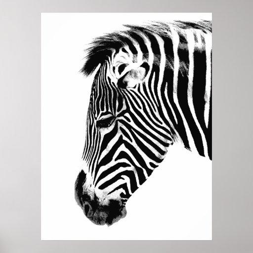 Zebra head front