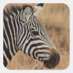 Zebra Head Square Stickers