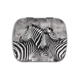 Zebra Herd Nature Safari Black and White Stripes Jelly Belly Candy Tin