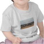 Zebra herd tee shirt