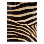 Zebra Hide 2 Postcards