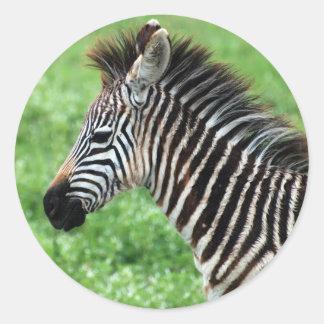 zebra horse classic round sticker