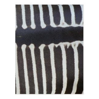 Zebra Image Postcard