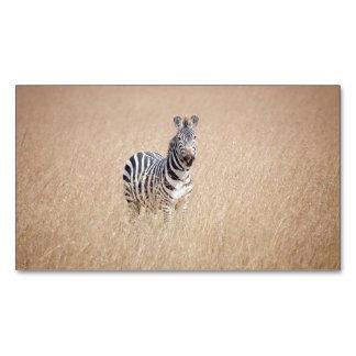 Zebra in high grass business card magnet