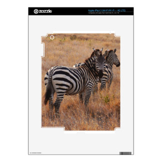 Zebra in Kenya Decal For iPad 3