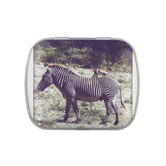 Zebra in Kenya Jelly Belly Candy Tins
