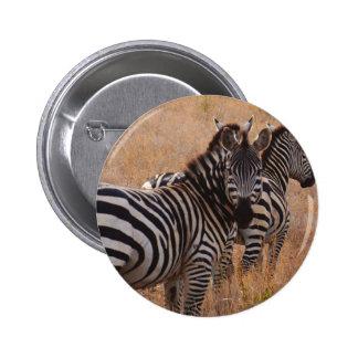 Zebra in Kenya Pinback Button