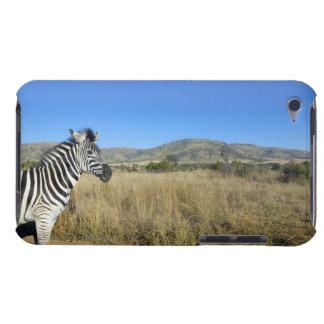 Zebra in open plain, Pilansberg National Park, iPod Case-Mate Cases