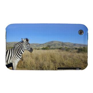 Zebra in open plain, Pilansberg National Park, iPhone 3 Case