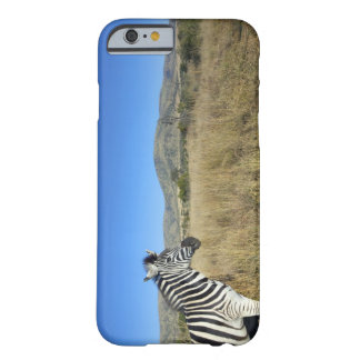Zebra in open plain, Pilansberg National Park, Barely There iPhone 6 Case