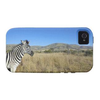 Zebra in open plain, Pilansberg National Park, Case-Mate iPhone 4 Covers