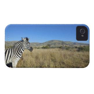 Zebra in open plain, Pilansberg National Park, iPhone 4 Cover