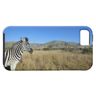Zebra in open plain, Pilansberg National Park, iPhone 5 Case