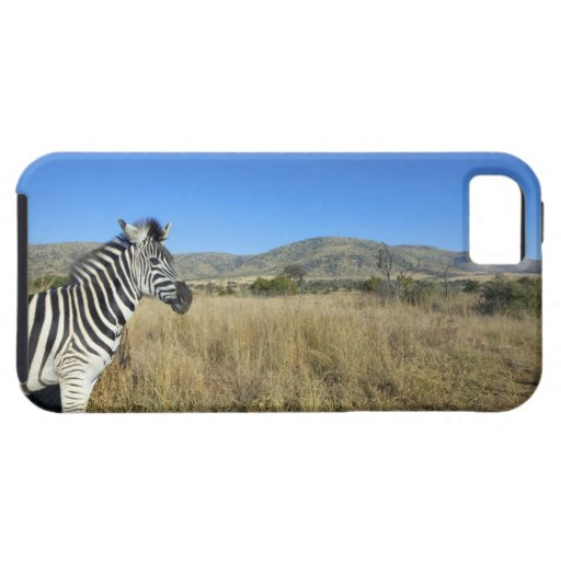 Zebra in open plain, Pilansberg National Park, iPhone 5 Cases