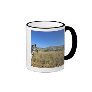 Zebra in open plain, Pilansberg National Park, Ringer Coffee Mug