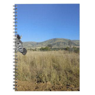Zebra in open plain, Pilansberg National Park, Notebook