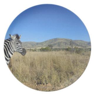Zebra in open plain, Pilansberg National Park, Plate
