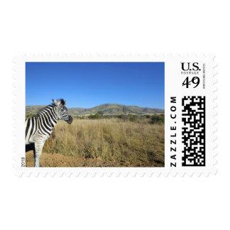 Zebra in open plain, Pilansberg National Park, Postage Stamps