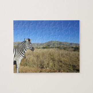 Zebra in open plain, Pilansberg National Park, Puzzle