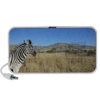 Zebra in open plain, Pilansberg National Park, Portable Speaker
