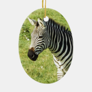 zebra in Serengeti.,Ngorongoro Crater Ceramic Ornament