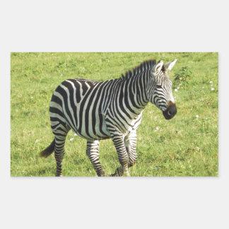 zebra in Serengeti.,Ngorongoro Crater Rectangular Sticker