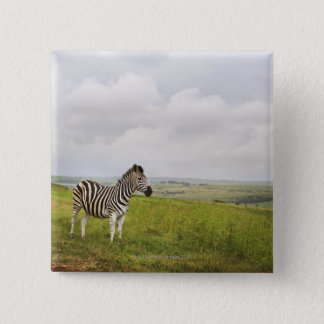 Zebra in the countryside, South Africa Button
