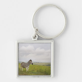 Zebra in the countryside, South Africa Keychain
