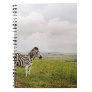 Zebra in the countryside, South Africa Spiral Notebook