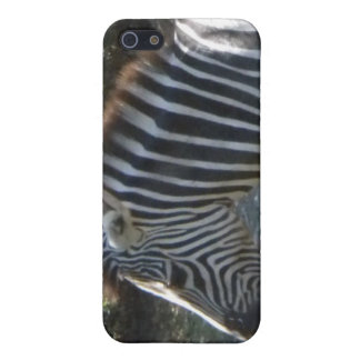 Zebra iPhone 4 case