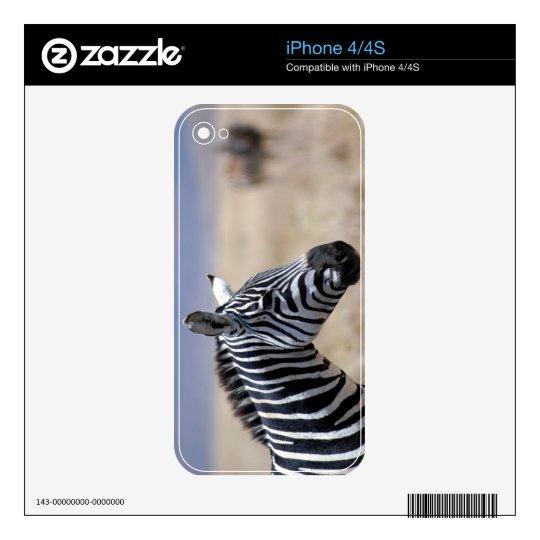 Zebra iPhone 4 Decals