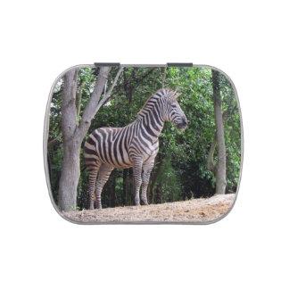 Zebra - Jelly Bean Candy Tin