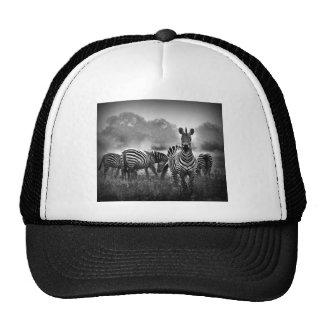zebra.jpg trucker hat