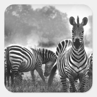 zebra.jpg stickers