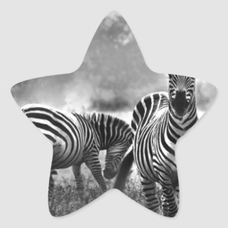 zebra.jpg star sticker