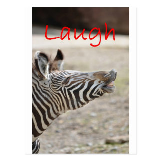 zebra laugh postcard