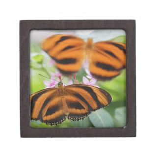 Zebra Long Wing Butterfly 2 Gift Box