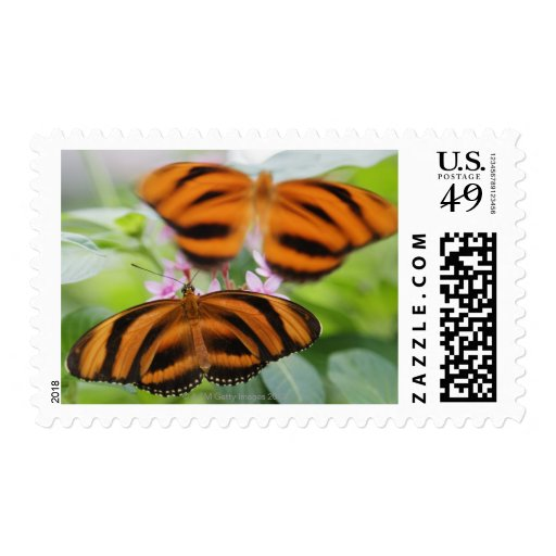 Zebra Long Wing Butterfly 2 Postage Stamps