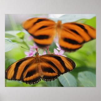 Zebra Long Wing Butterfly 2 Poster